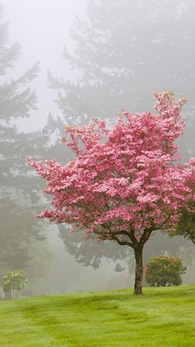 bloomed tree